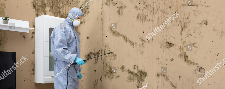 Call Us For The Best Mold Remediation Services Loveland